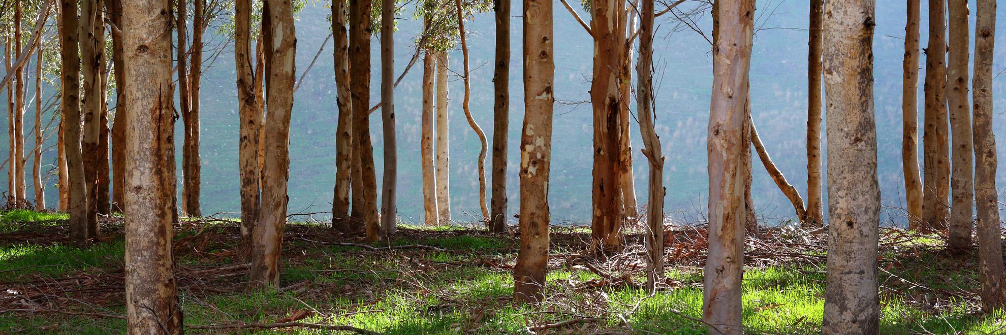 Skelettdelar hittade i vasterasskog ska dna analyseras